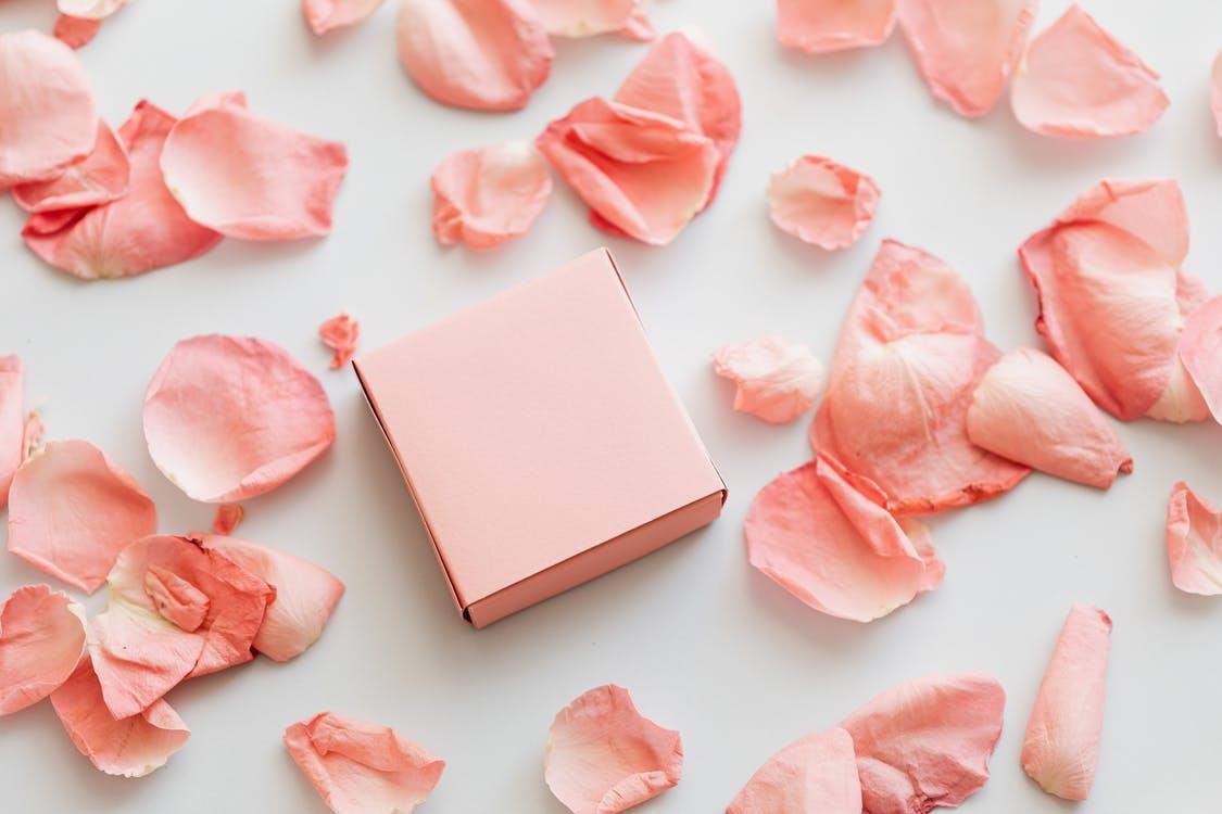 Present and petals of light pink rose